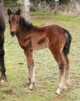 Geralee filly