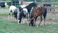 Wapuzzan's 2013 foals